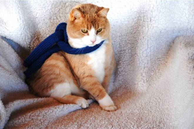 Tips wearing his new scarf.