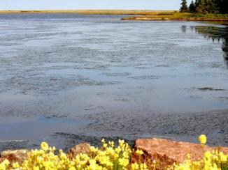 View of a lagoon at the start of the Salt Marsh trail.